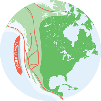 Bird Migration Maps